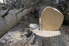Logging Stock Photos