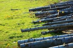 logging стоковая фотография