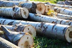 logging стоковое изображение