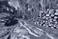 logging стоковые изображения