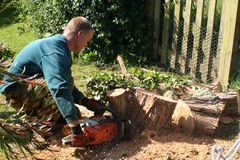 Logging. Man cutting down tree Royalty Free Stock Photography