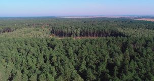 Logging aerial view, Deforestation on an industrial scale, deforestation with special equipment, deforestation of the