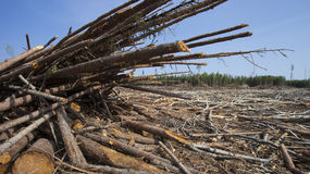 Logging aftermath Royalty Free Stock Photo