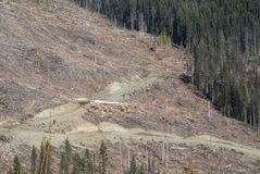 Logging area along Highway 24. Modern Forestry Near Clearwater BC Stock Images