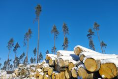 Logging area. Royalty Free Stock Photography