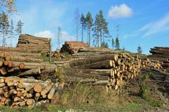 Logging in Autumn Forest Stock Photo
