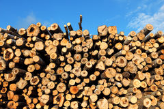 Logging Royalty Free Stock Images