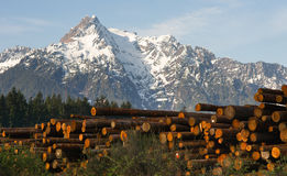 Logging Camp Whithorse Mountain Darrington Washington Stacked Lo Stock Image