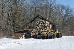 Logging in a central Minnesota forest. Oak logs in a Central Minnesota forest on a winter day stock image