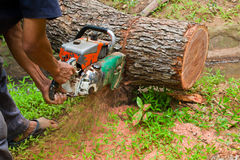 Logging with chain saw. By worker Royalty Free Stock Image