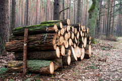 Logging. Is the cutting, skidding, on-site processing, and loading of trees or logs onto trucks or skeleton cars Royalty Free Stock Photography