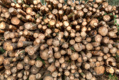 Logging in Derbshire Dales Stock Photos