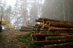 Logging in forest Stock Photography