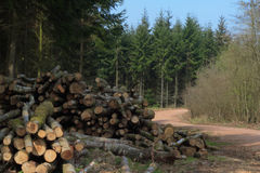 Logging in the forest. Pile of logs from forest management, Forest of Dean, England royalty free stock photography