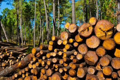 Logging Stock Image