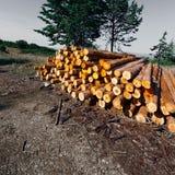Logging Stock Images