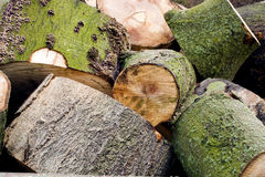 Logging forestry. A hill of wooden logs, blocks Stock Image