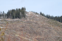 Logging on Highway 24 BC. Modern Logging practices in steep terrain Stock Images
