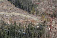 Logging on Highway 24 BC. Modern Logging practices in steep terrain Stock Image