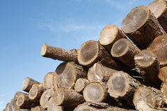Logging industry. Stack of sawn tree trunks with copyspace Royalty Free Stock Image