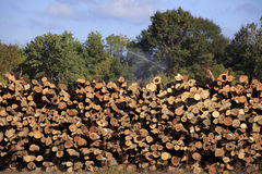 Free Logging Industry Royalty Free Stock Photography - 80081357