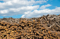 Logging. Industry destructive nature. Lumberyard. Logging. Industry destructive nature. Material for the production of cellulose. Natural resource materials and Royalty Free Stock Photo