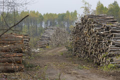 Logging Industry in the Great Lakes Stock Images