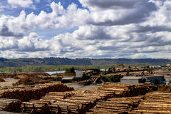 Logging Industry Log Yard Royalty Free Stock Images