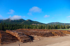 The logging industry in northern bc Royalty Free Stock Photography