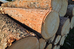 Logging logs Royalty Free Stock Photography