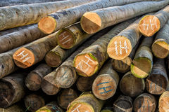 Logging lumber Stock Photo