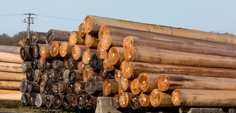 Logging lumber Stock Images