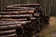 Logging, old wood, Stock Images