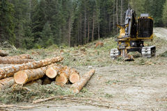 Logging Operation. A collection of newly cut timber and excavator from a logging operation Stock Photography
