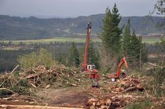 Logging operation. Logging of Pinus radiata, Westland, New Zealand Royalty Free Stock Photos