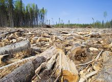 Logging operation in Canada. Lots of trees down in a logging operation in Saskatchewan royalty free stock photo