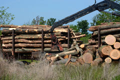 Logging operation Stock Photos