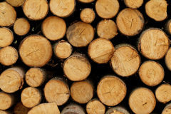 Logging. Photo of a logging site in the forest stock photo