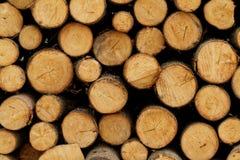 Logging Stock Photo