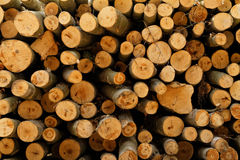 Logging. Photo of a logging site in the forest stock images