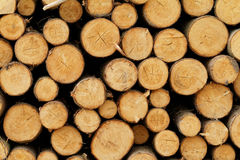 Logging. Photo of a logging site in the forest royalty free stock photo