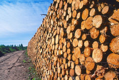 Logging pine log piles Stock Photo