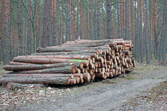 Logging pine log piles Royalty Free Stock Photo