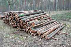 Logging pine log piles Stock Photos