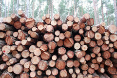 Logging pine log piles Stock Photography