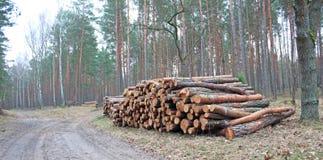 Logging pine log piles. Pile of Timber Pine logs stacked outdoors Royalty Free Stock Photos