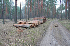 Logging pine log piles Royalty Free Stock Photography