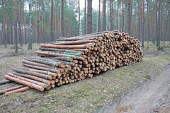 Logging pine log piles Royalty Free Stock Images