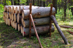 The logging. Poland Royalty Free Stock Photo