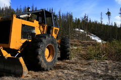 Logging At Redfish Lake. Tree thinning operation at Redfish Lake near Stanley Idaho Royalty Free Stock Photography